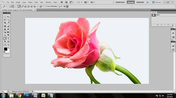 Flower Photo Background Removal
