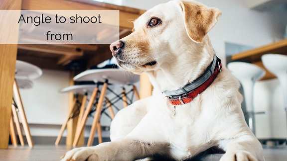Top 10 Pet Photography Tips and tricks