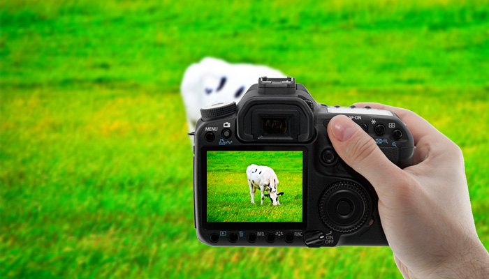 Camera setting for livestock photography