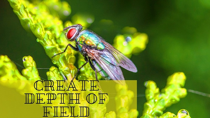 Insects Photography Tips
