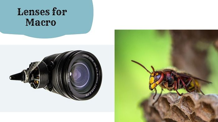 Macro Photography Tips and Tricks