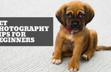 Pet photography tips for beginners