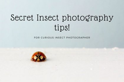 Secret Insect photography tips