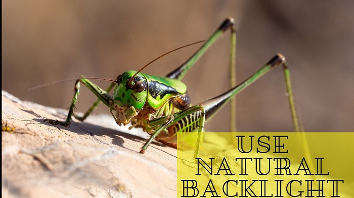 Top 10 Insects Photography Tips