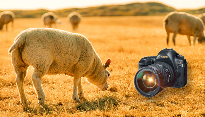 best camera for livestock photography