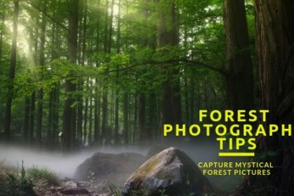 Forest photography tips and tricks