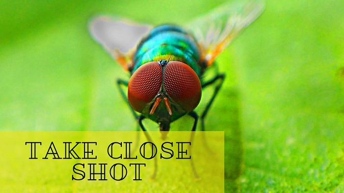 Insects Photography Tips and Techniques for Beginners