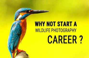 wildlife photography career